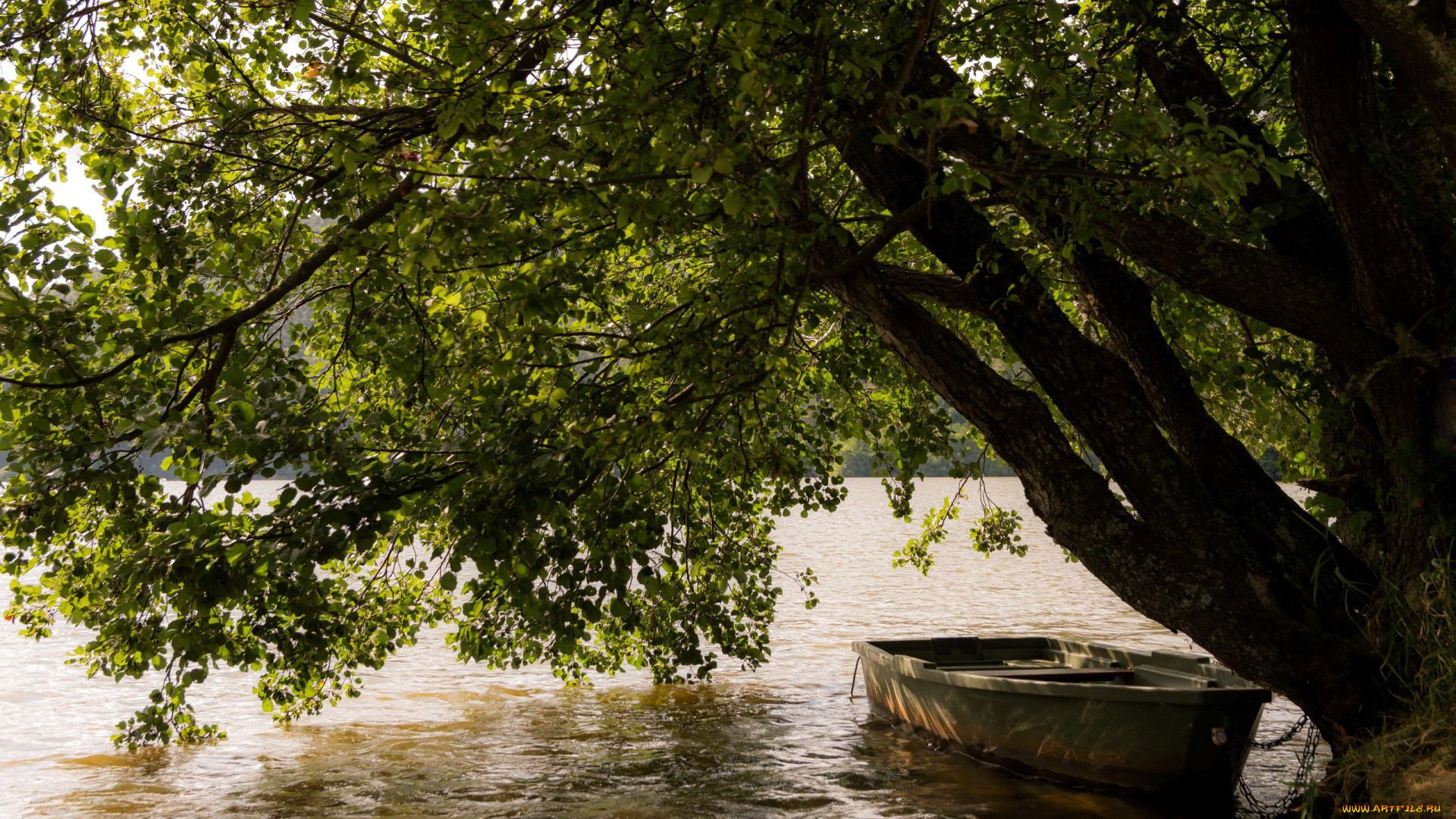 корабли, лодки,  шлюпки, река, лодка, дерево